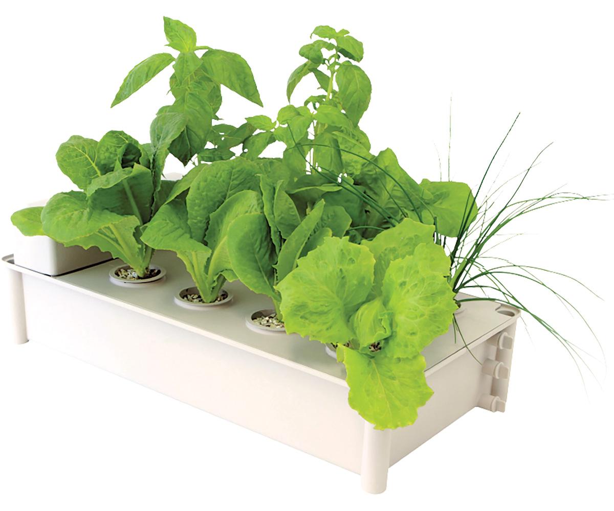 Salad Box Hydroponic Salad Garden Kit (4/cs)