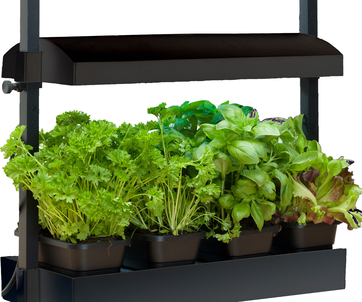 Micro Grow Light Garden Black (1/ea)