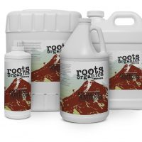 Roots Ancient Amber 2.5 gal