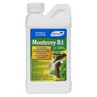 Monterey B.t. Pint (12/Cs)